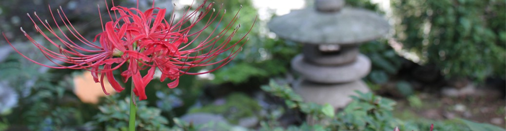 浄照寺の歴史